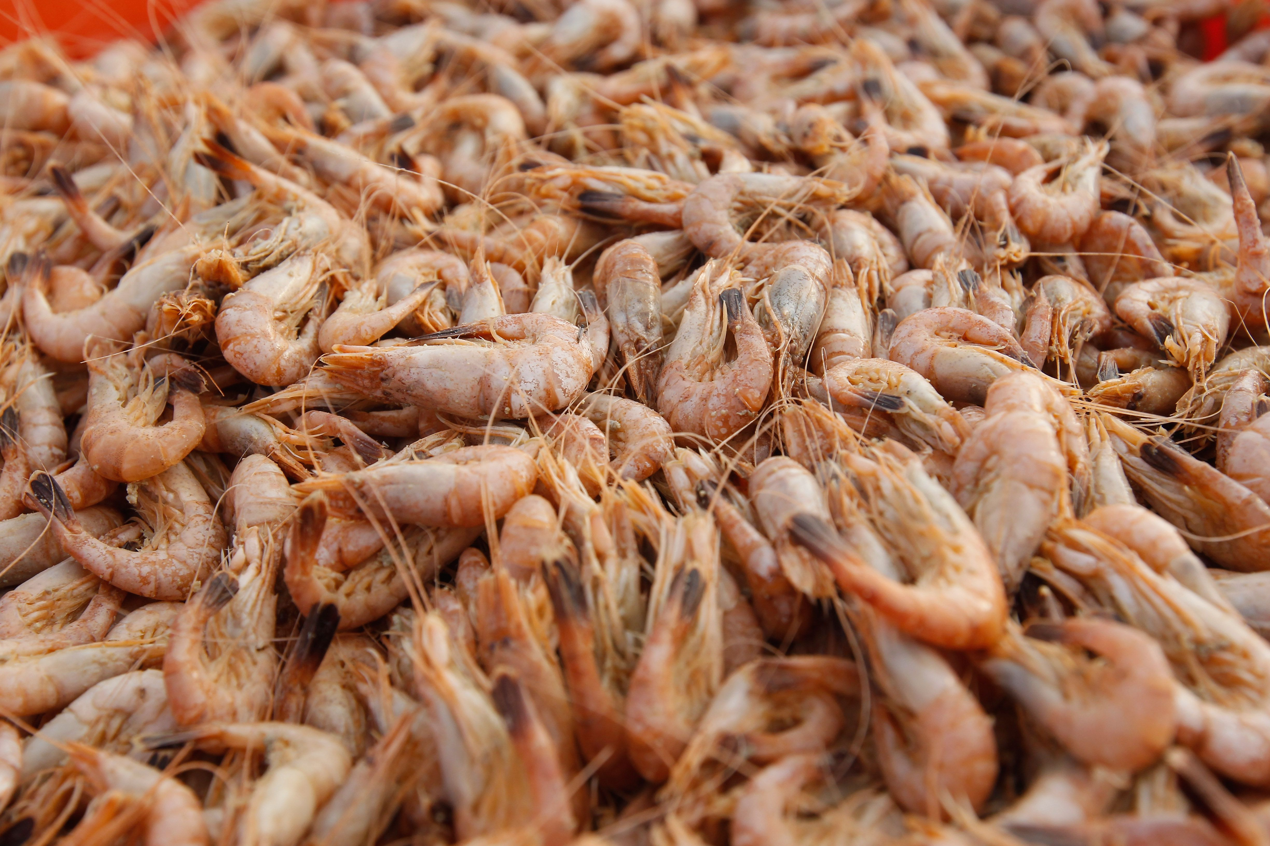 American Shrimp Types: Wild-Caught and Farmed