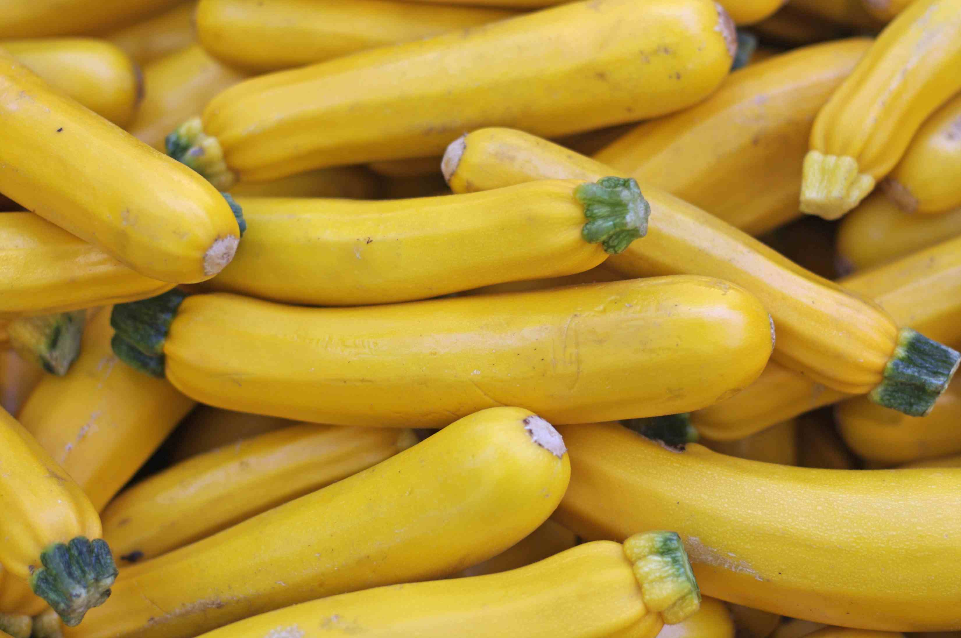 Types Of Zucchini And Summer Squash