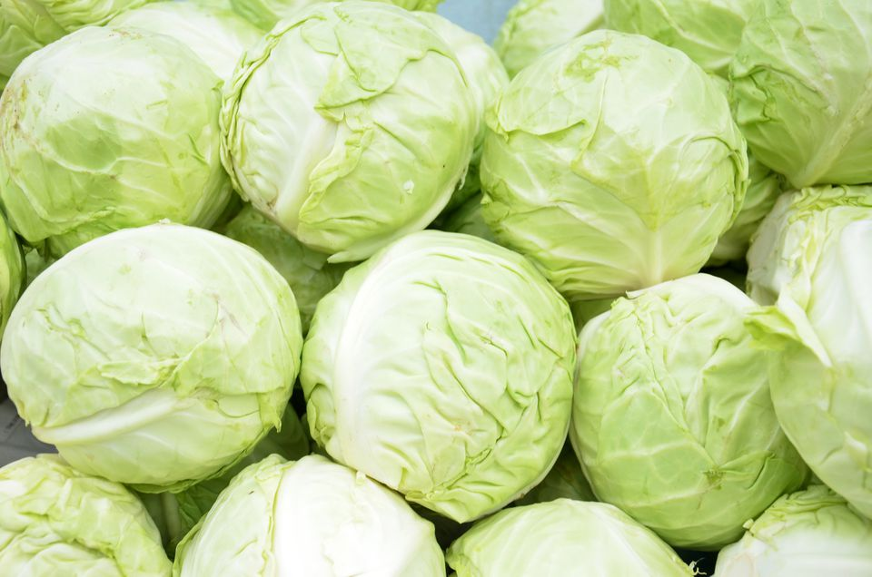 Heads of green cabbage