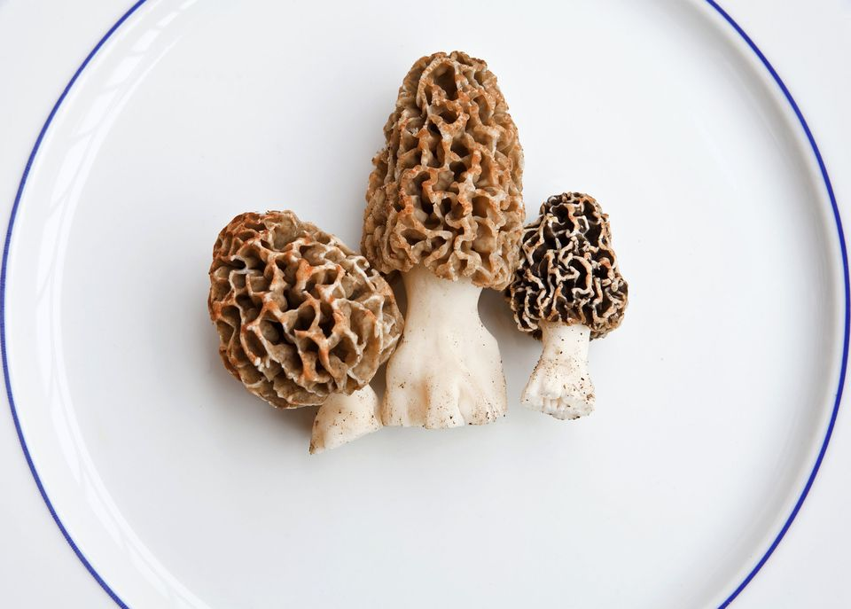 Three uncooked morel mushrooms on a serving plate