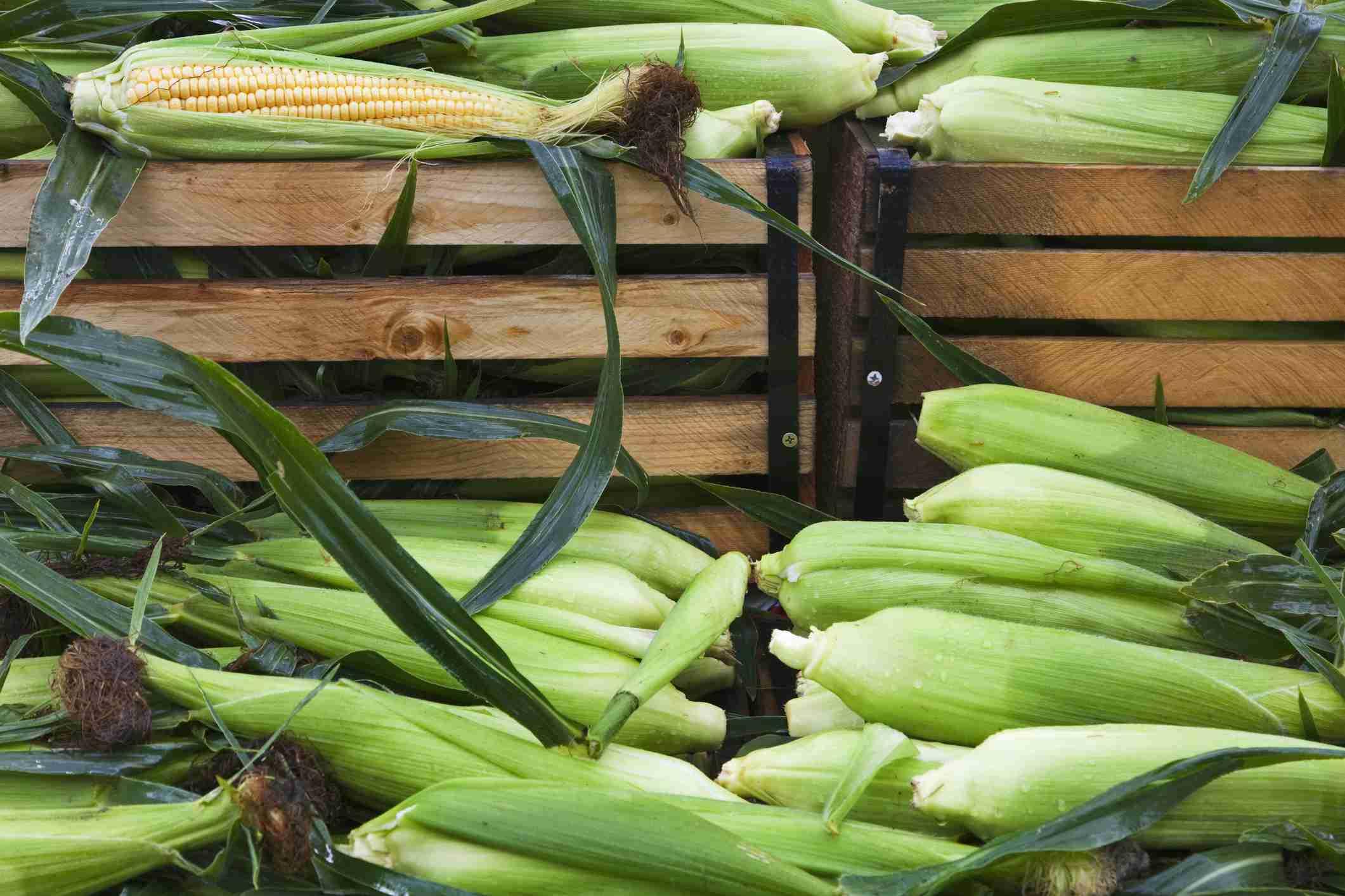 Corn at a Montana Market