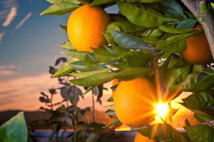 Glyko Portokalaki: Cuchara de cáscara de naranja dulce