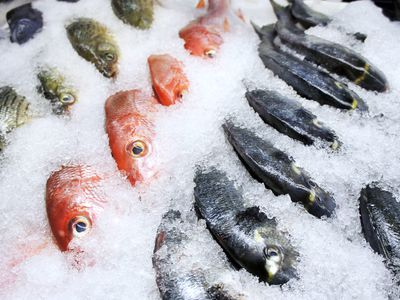 How to Store Fresh Fish at Home