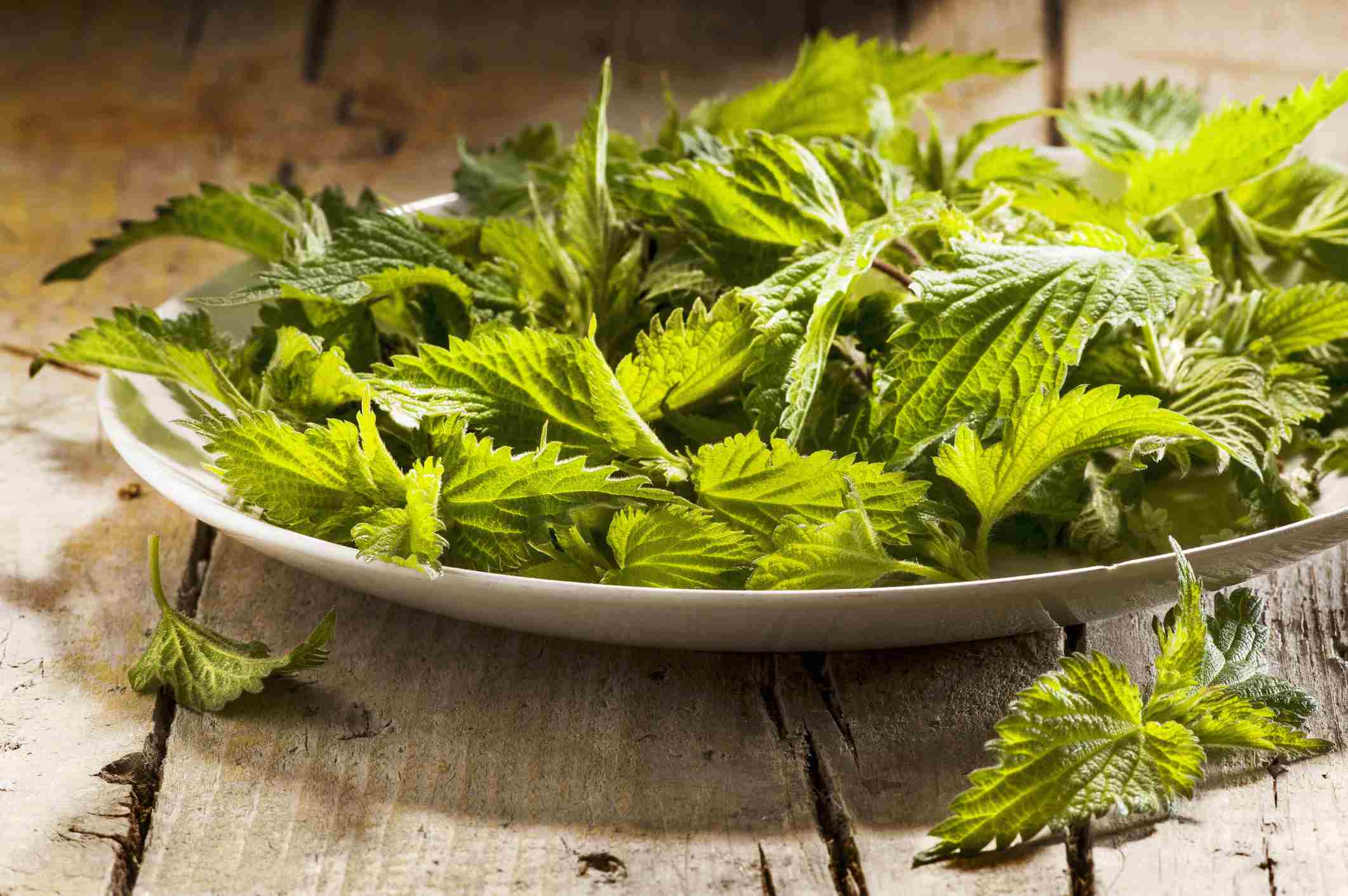 Fresh stinging nettle leaves in a bowl on a wooden table