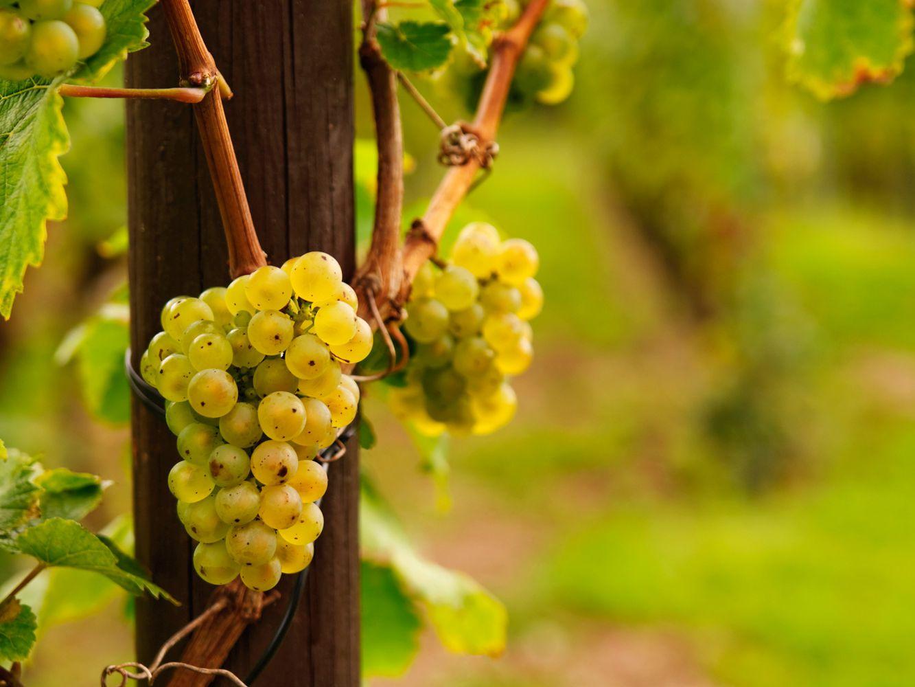 Riesling Rules - German Wine Classifications