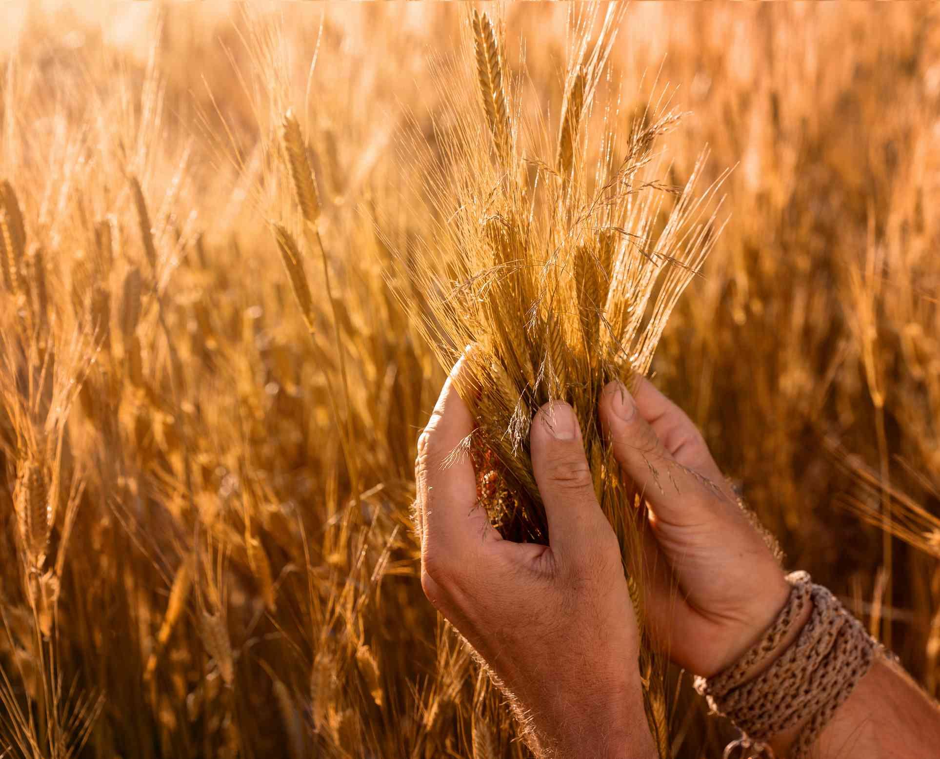 einkhorn wheat