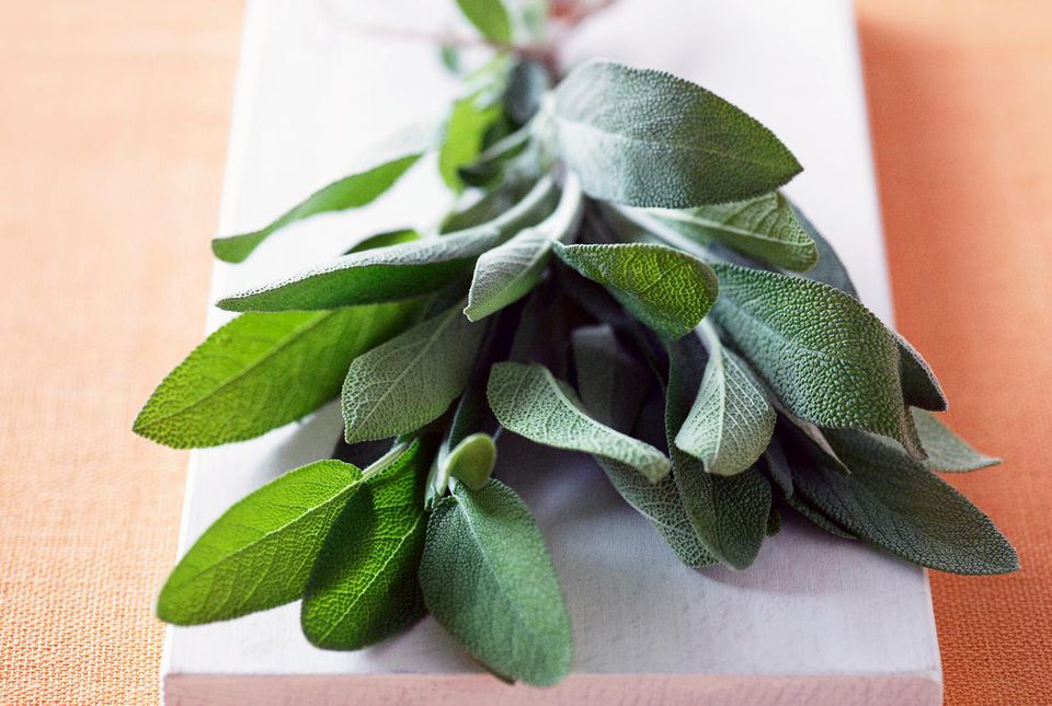 A bundle of fresh sage leaves prepared for storage.
