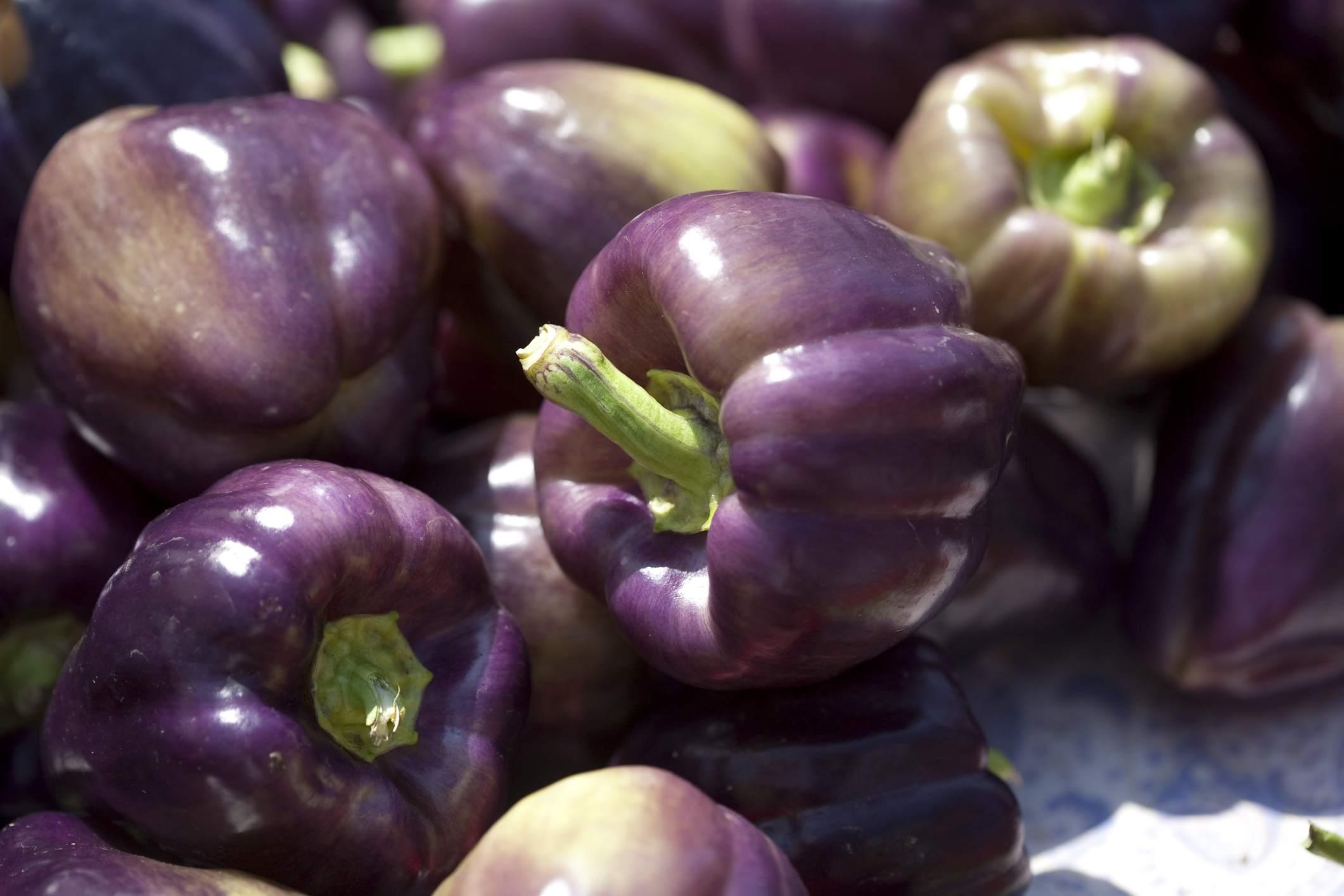 Sweet Bell Peppers—Purple