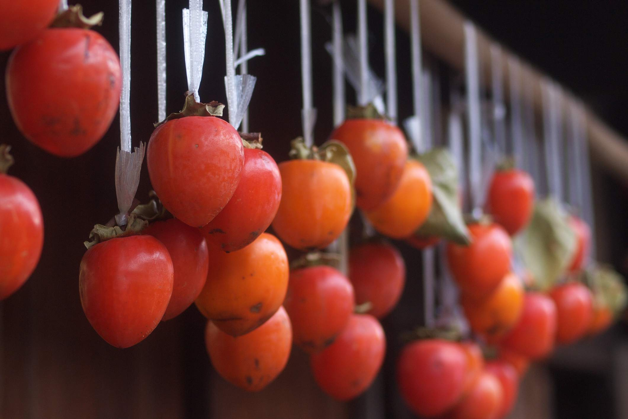 Japanese Persimmons Hung to Dry