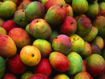 Mango Varieties From Champagne to Kent