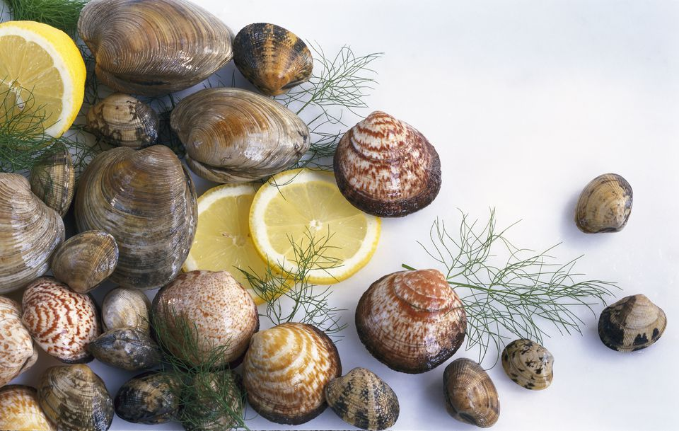 Types of Clams and Cockles