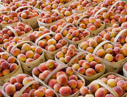 Ripe Peaches in Baskets