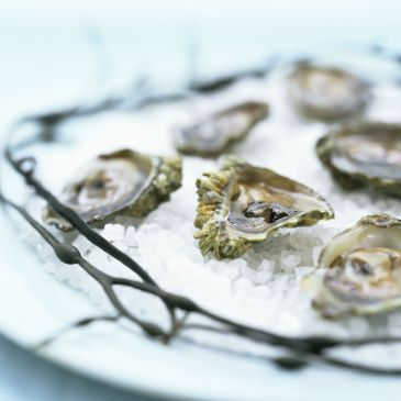 Olympia Oysters