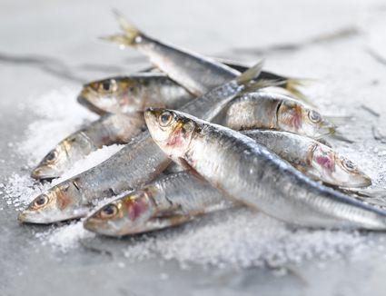 A pile of fresh sardines
