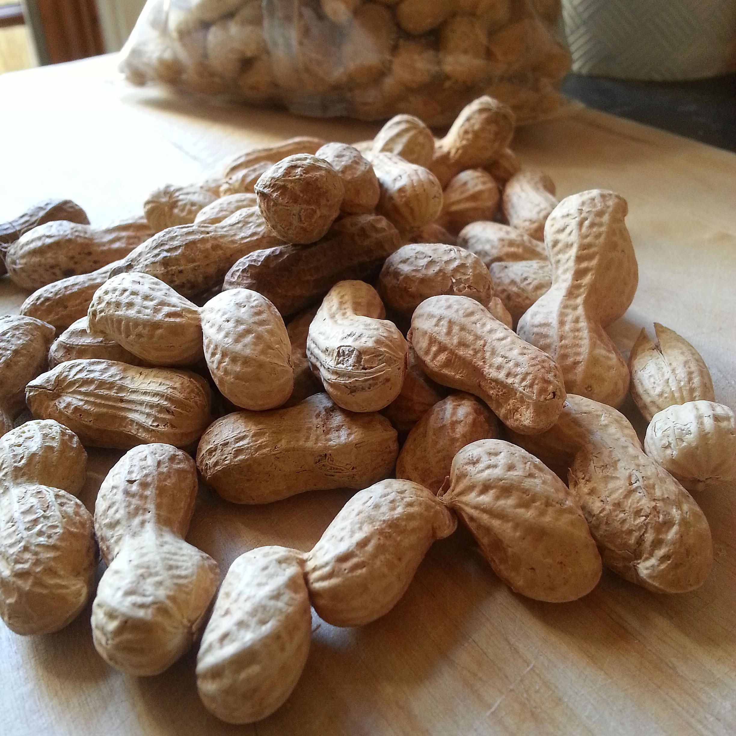 Peanuts in Shells