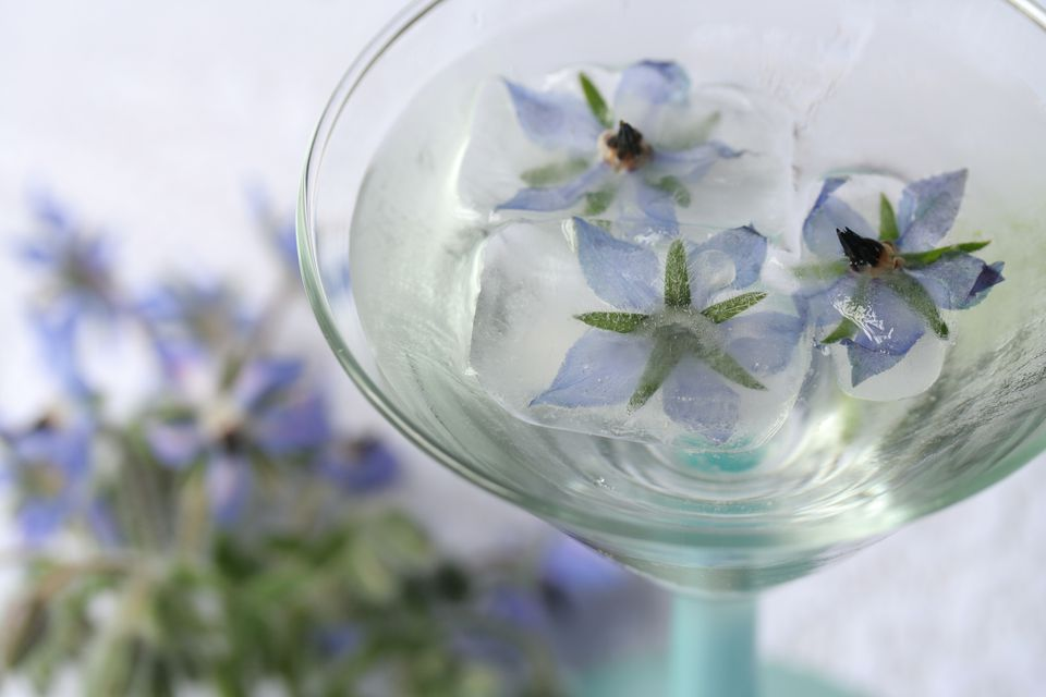 Borage Cocktail