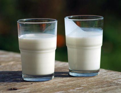 A glass of milk (left) and a glass of buttermilk (right). Buttermilk is thicker and covers the glass