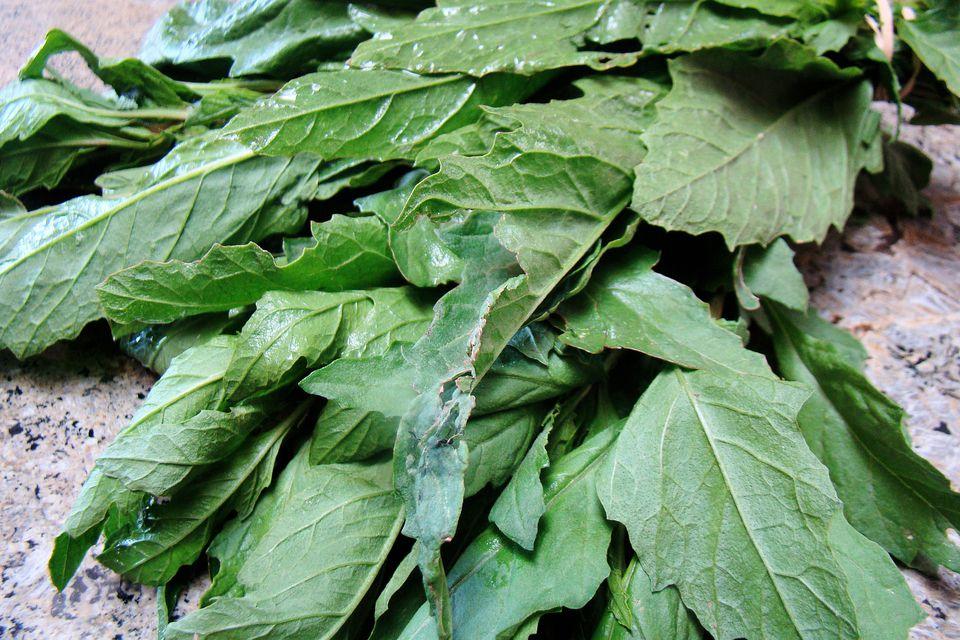 Epazote leaves