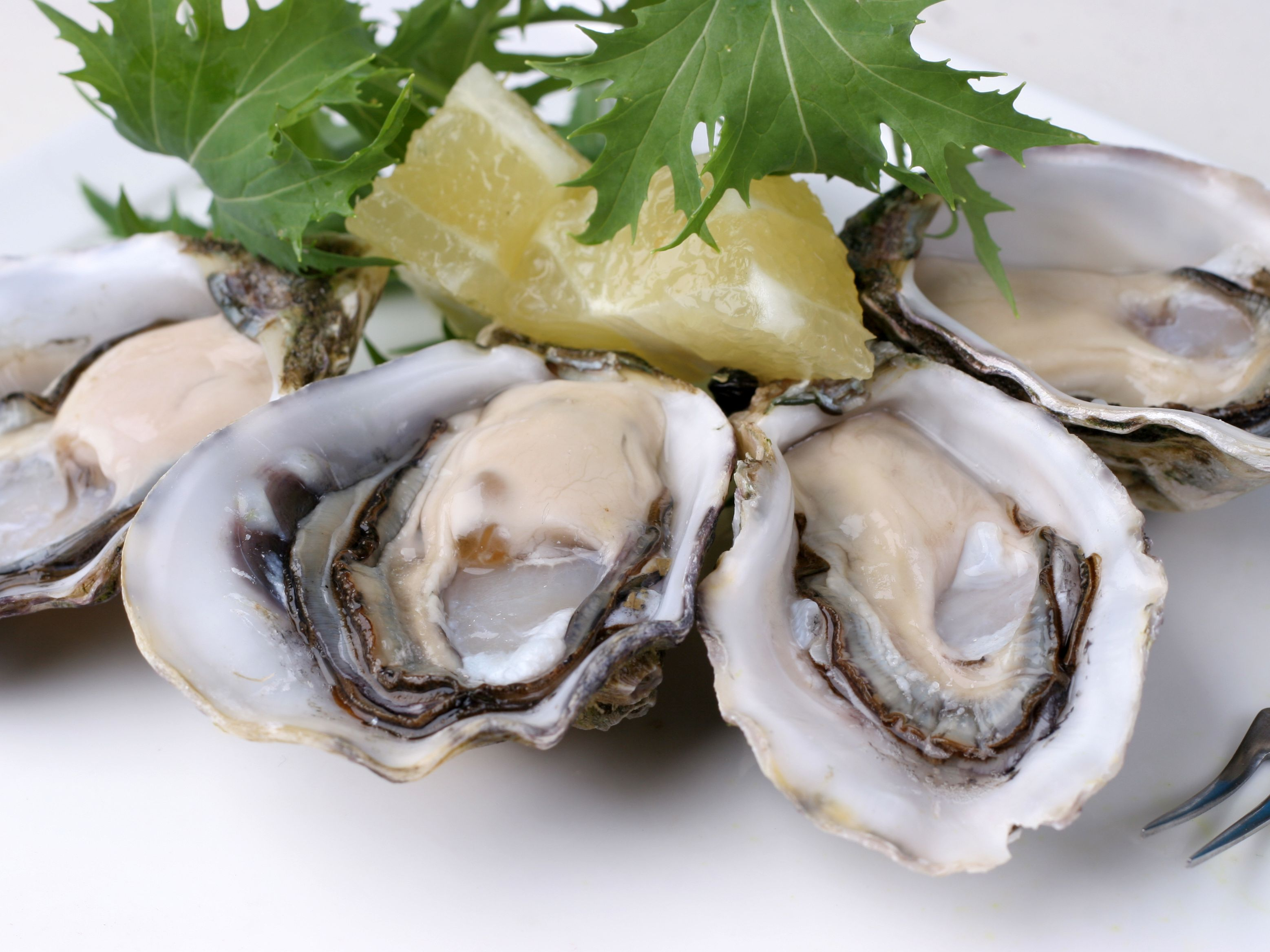 A Guide To The Diffe Types Of Oysters