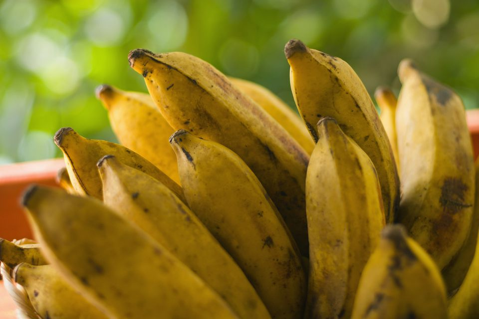 Close up of a plantain bunch.
