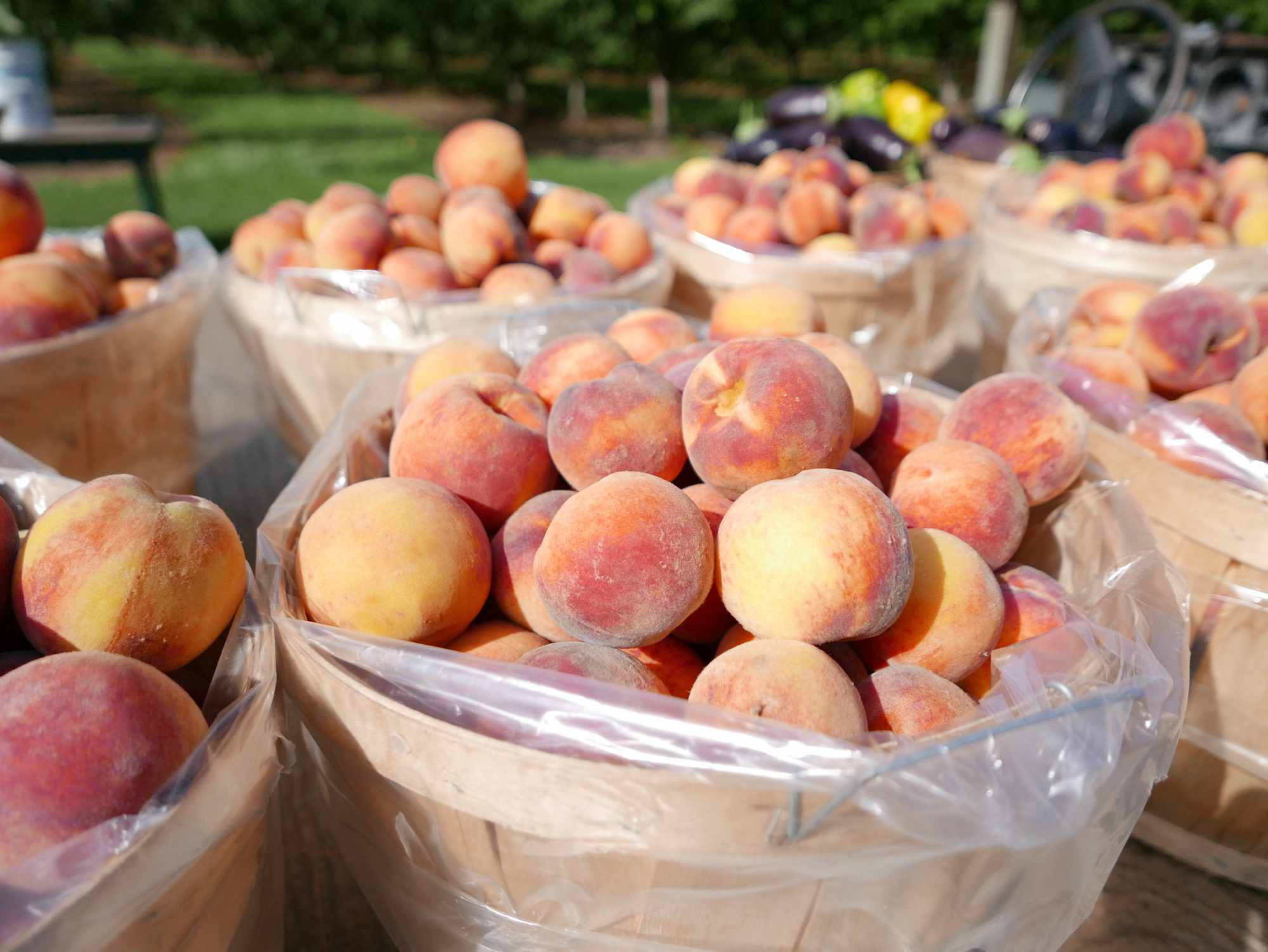 Baskets of Peaches