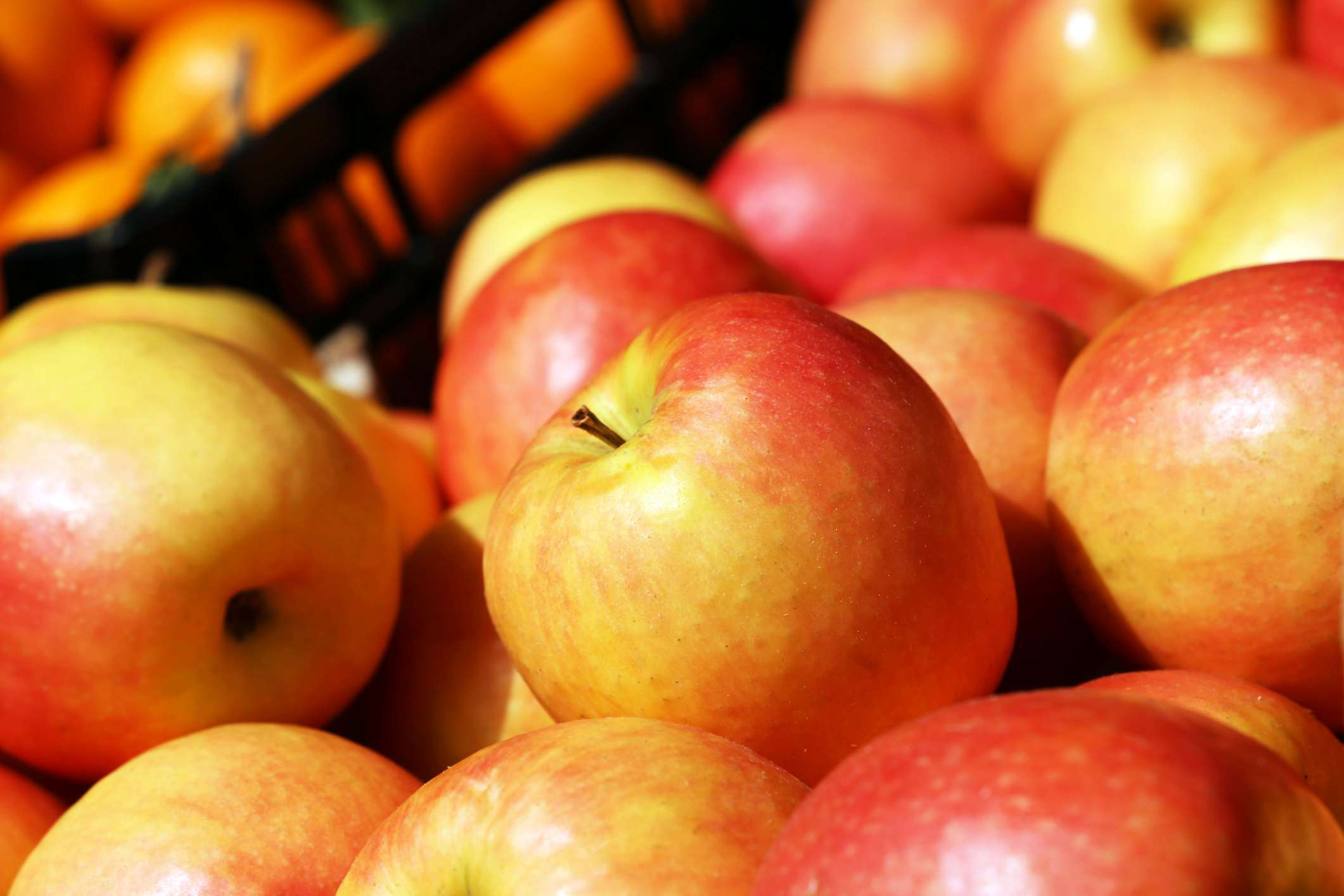 Northern Spy Apples