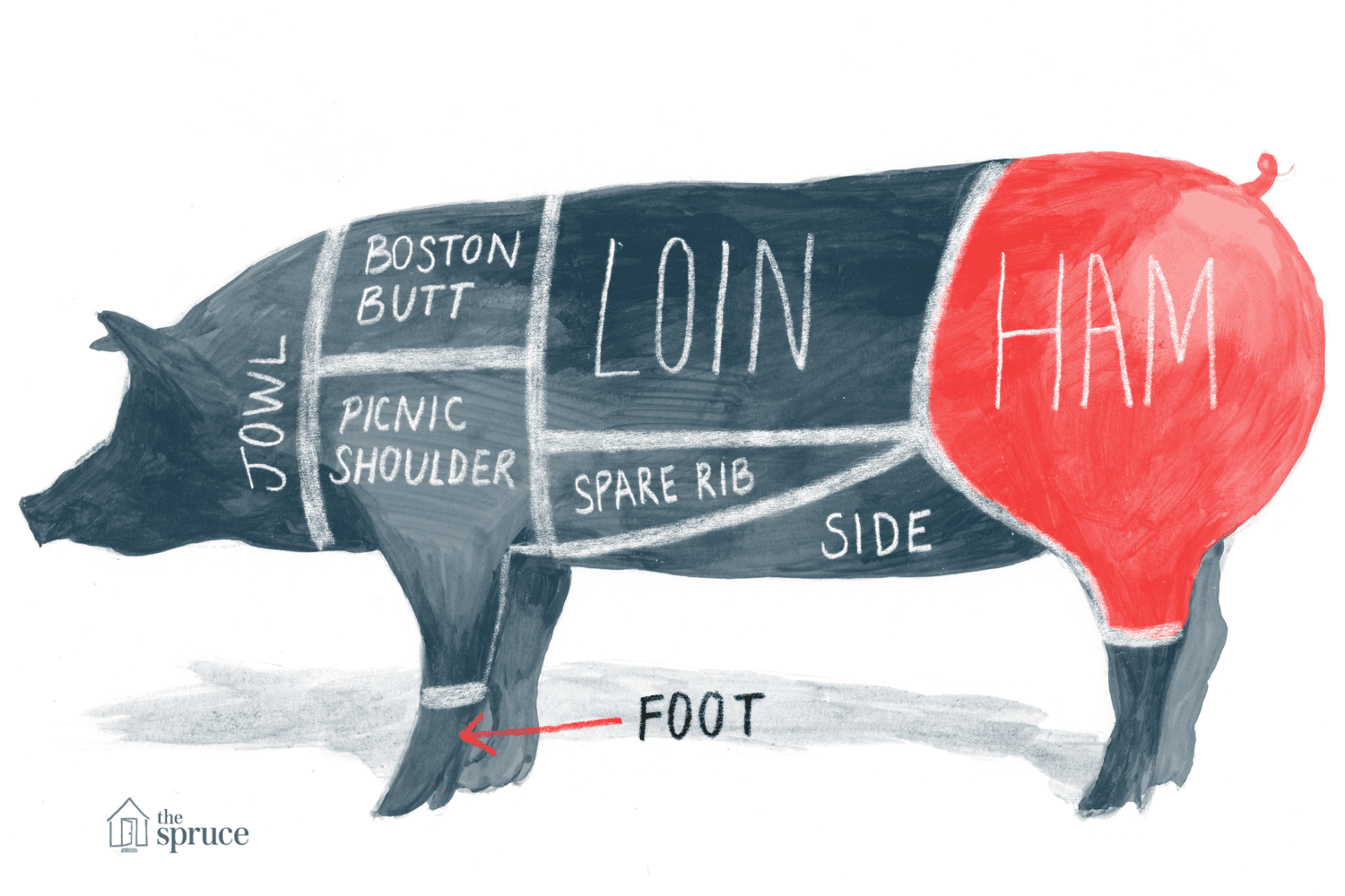 Illustrated diagram of the cuts of pork - highlighting the ham