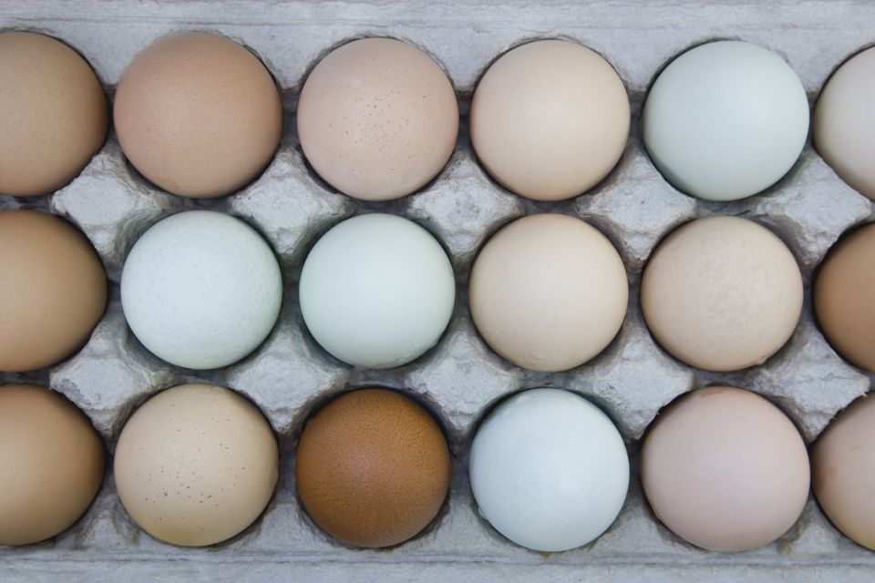Eggs in carton from various breeds, California, USA