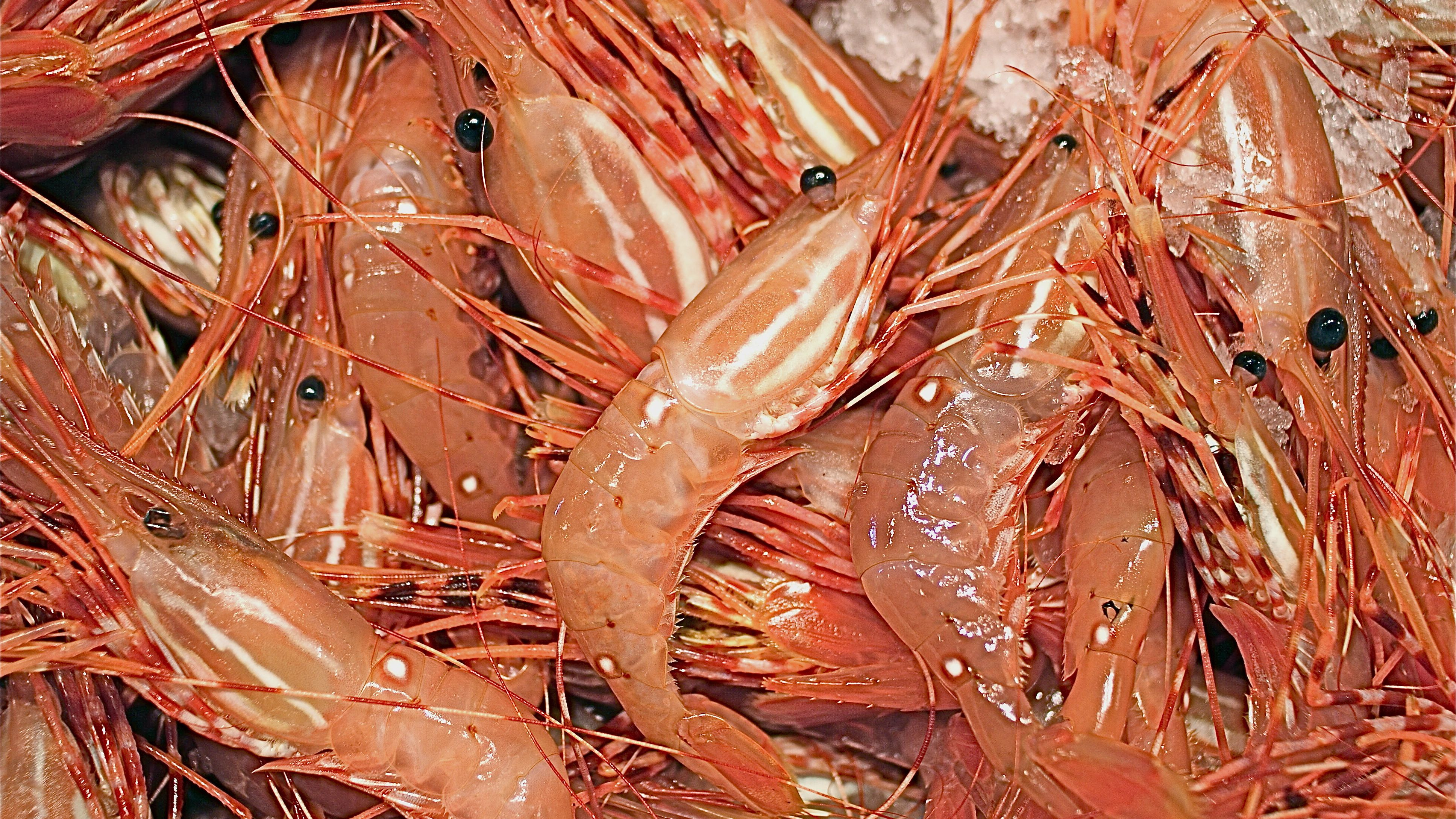 What Are Spot Prawns And How Are They Used
