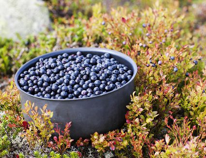 Bilberries in a pot