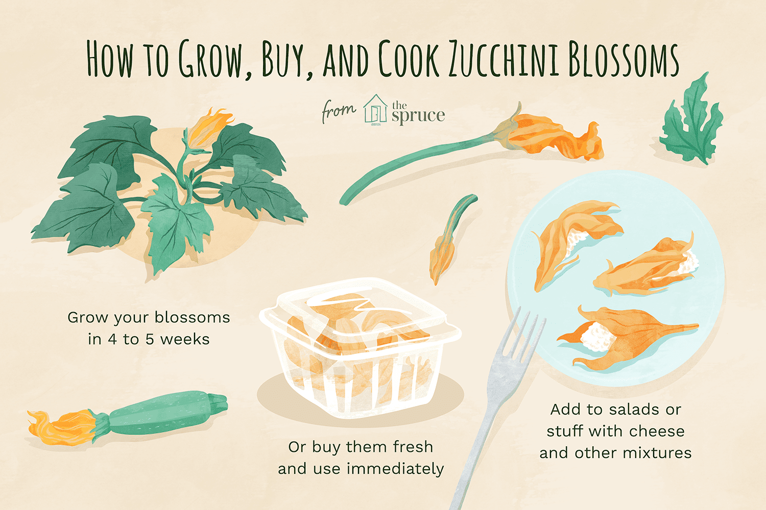 Instructions describing how to grow, buy, and cook zucchini blossoms