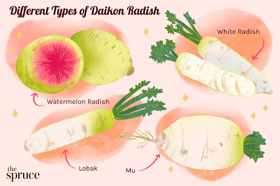 Different types of daikon radish