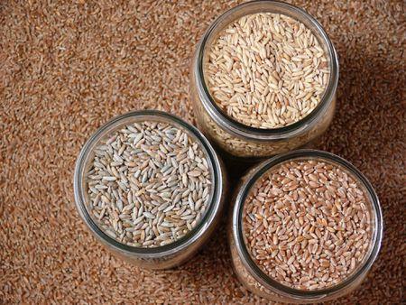 Protein Content Of Gluten Free Grains