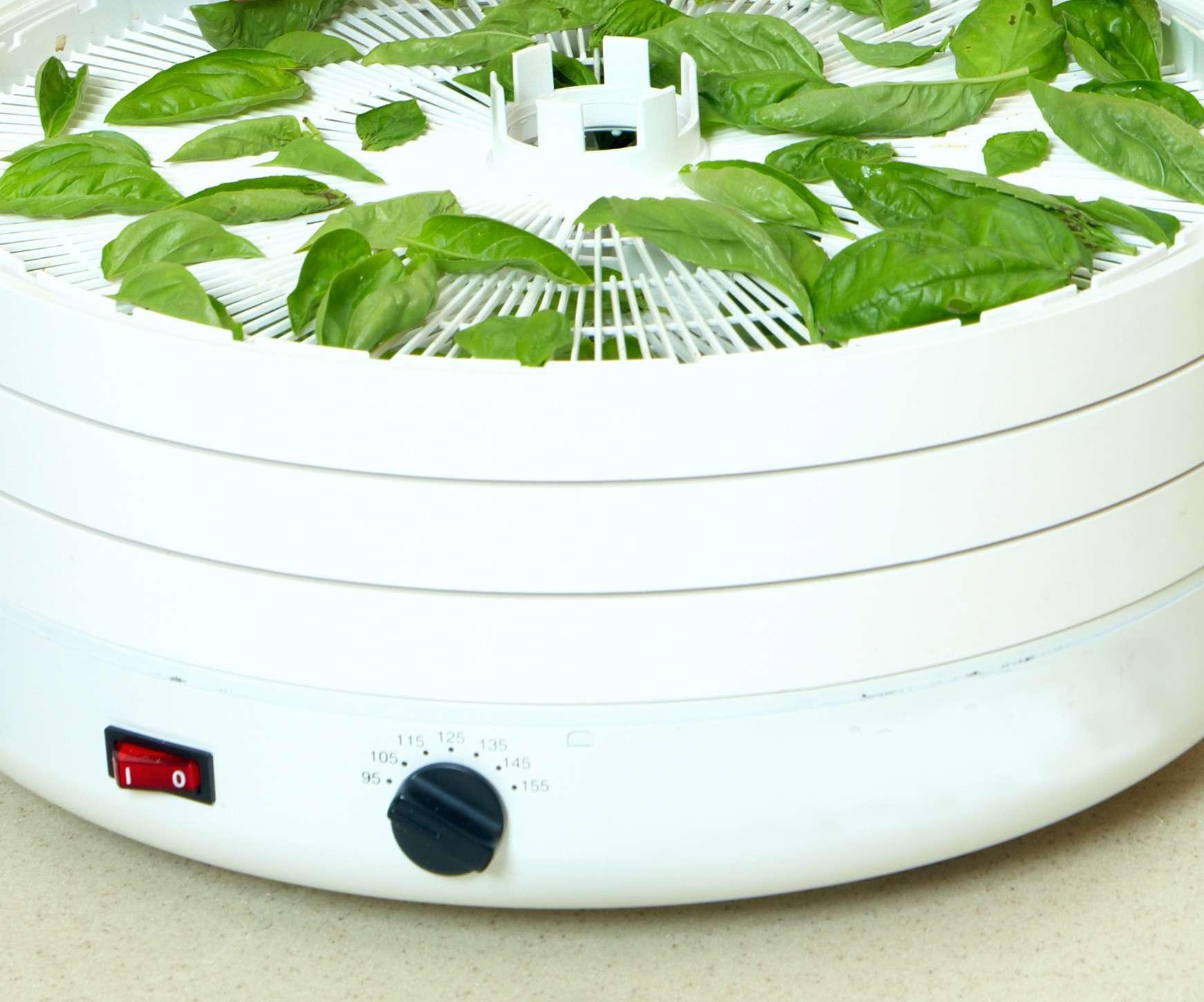 Drying herbs in the dehydrator
