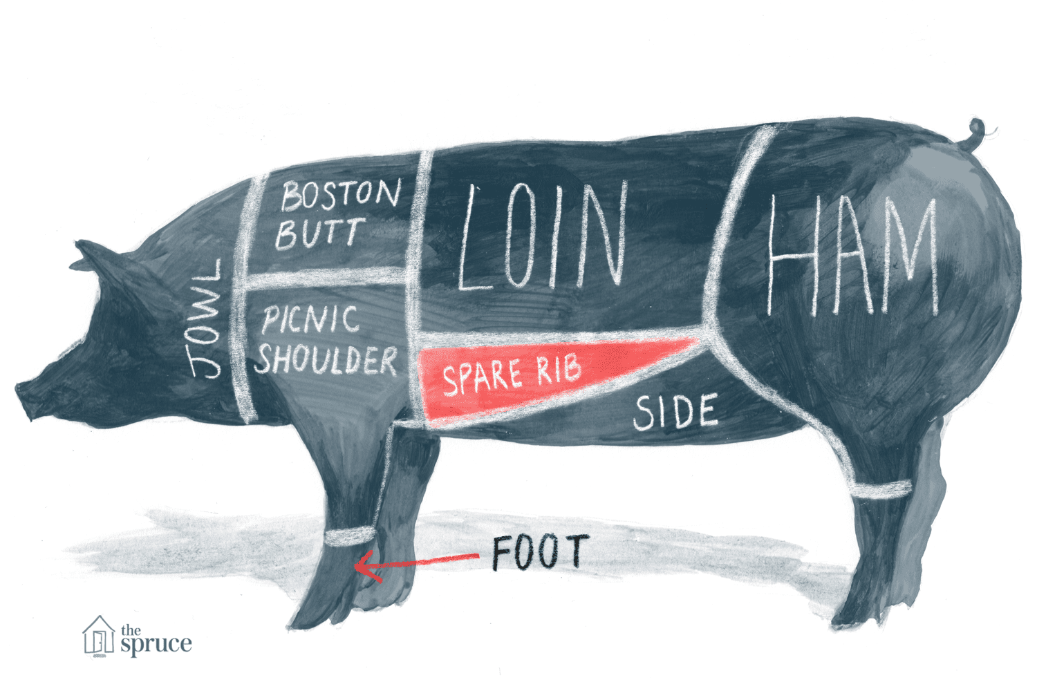 Illustrated diagram of the cuts of pork - highlighting the spare rib