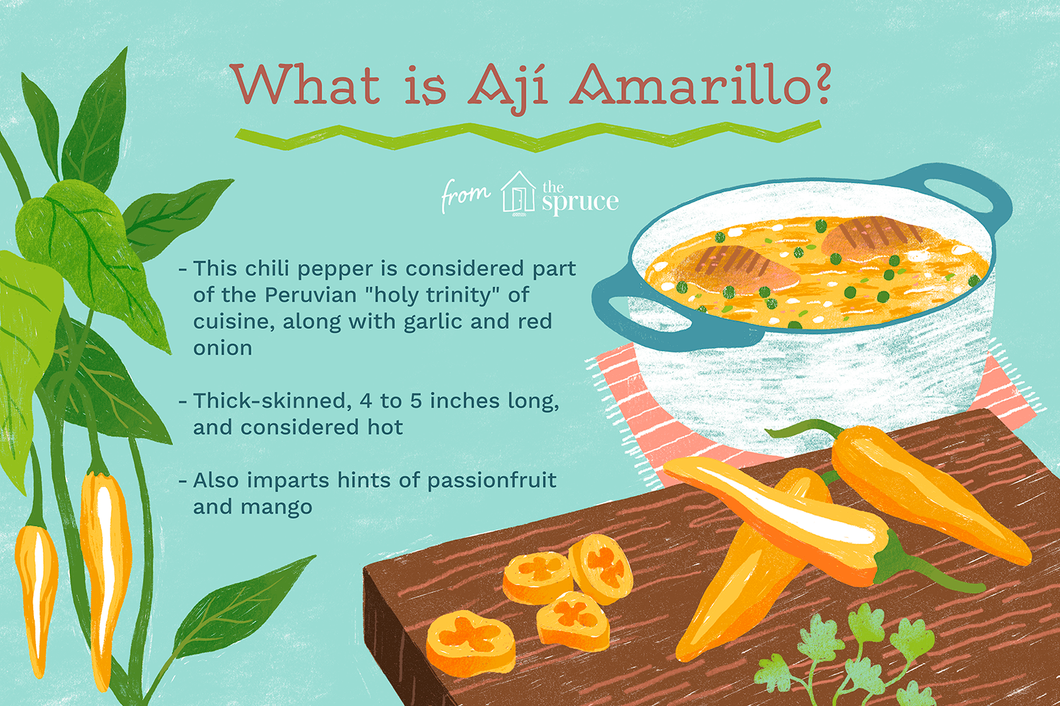 illustrated overview of what aji amarillo is