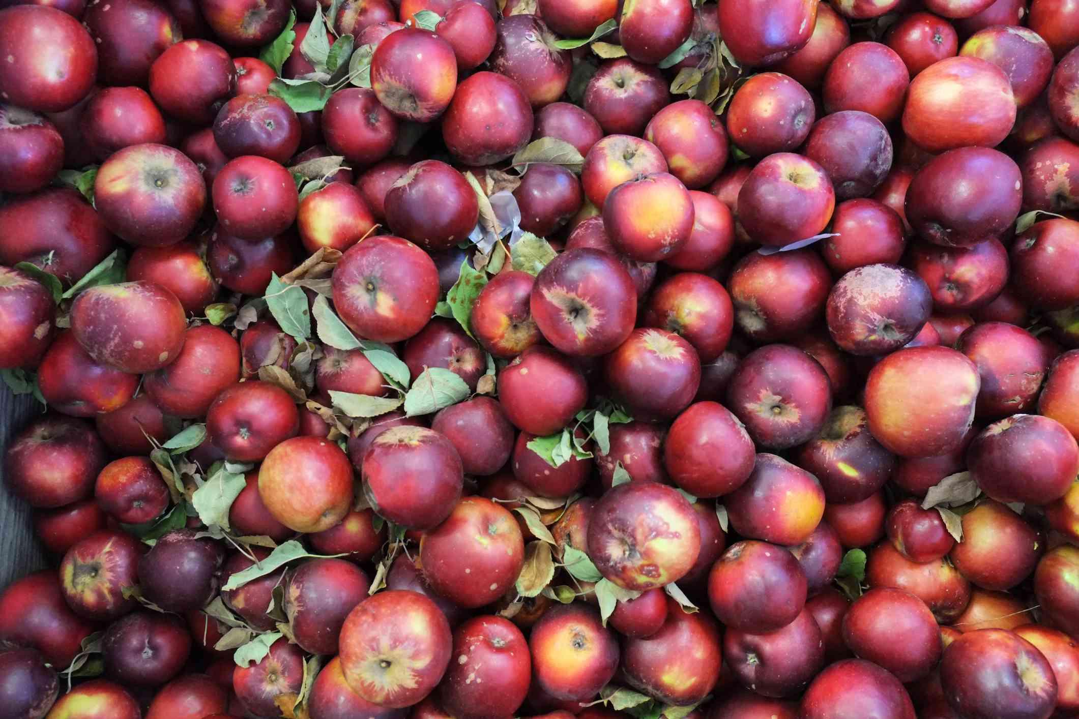 Black Arkansas Apples