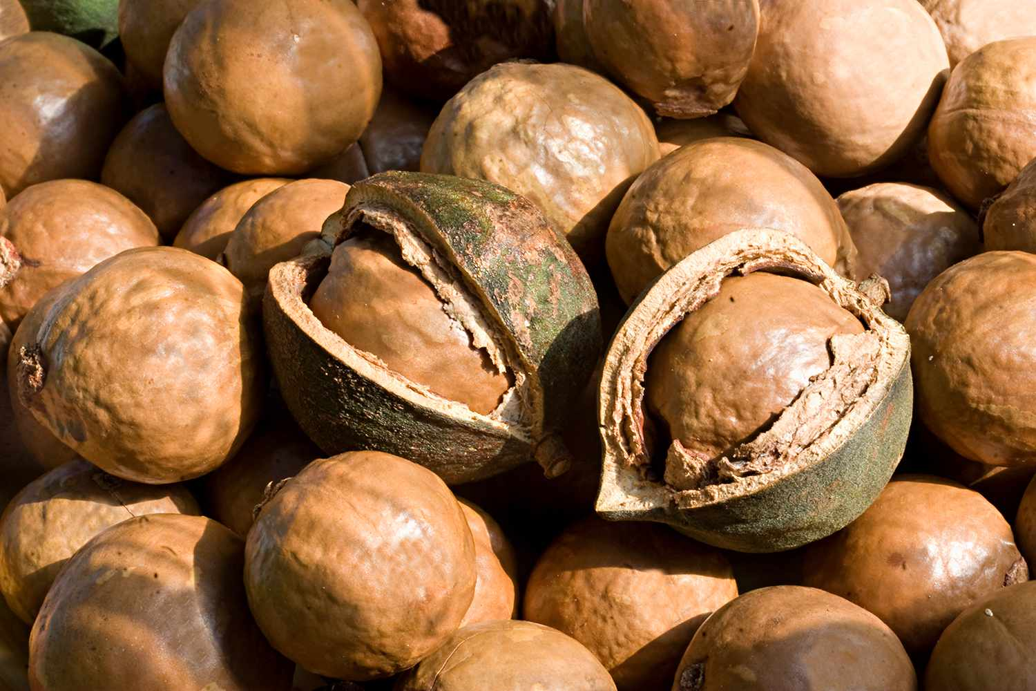 Macadamia nuts in dried outer shell, Louis Trichard, Limpopo