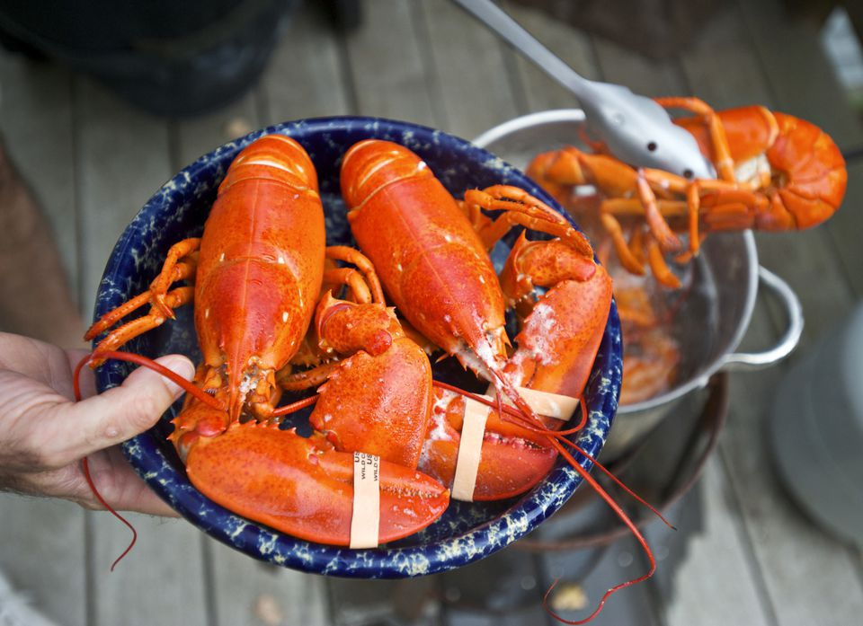 A plate of Maine lobster