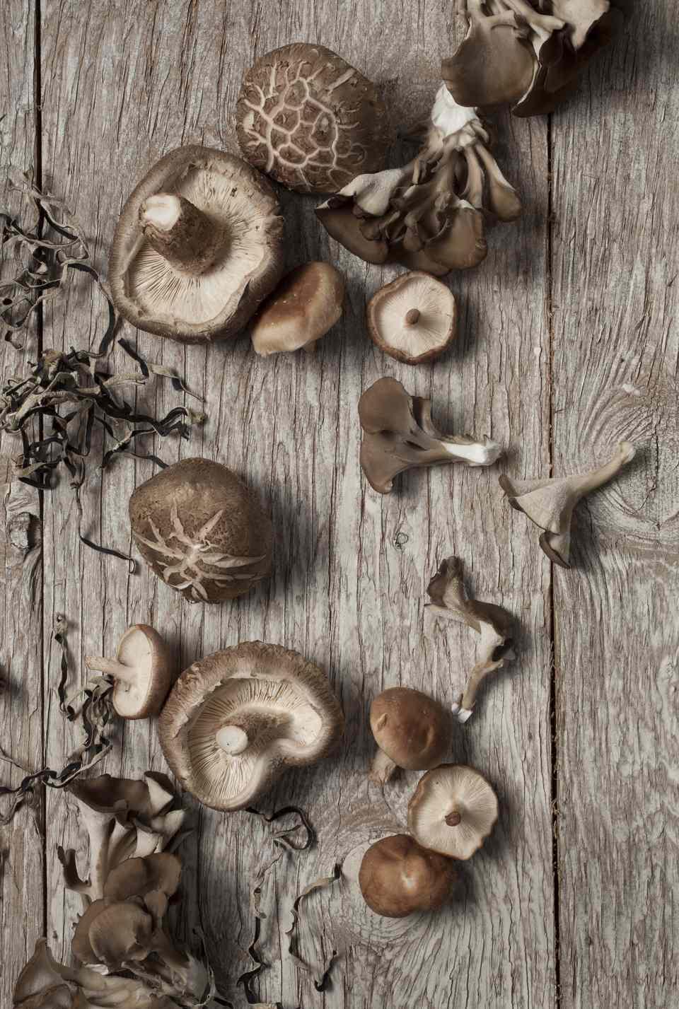 Chinese shiitake mushroom