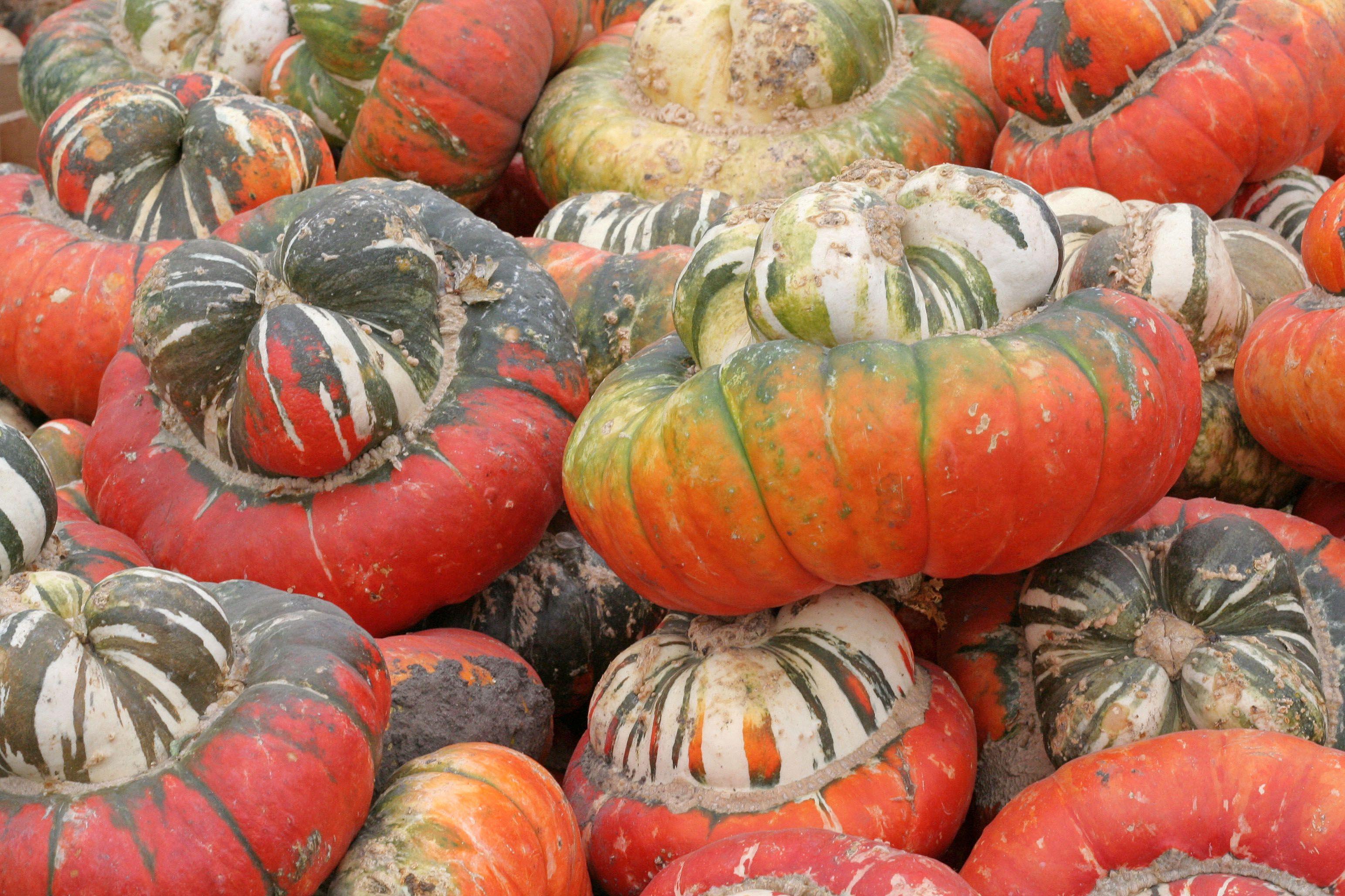 Pile of Turban Squash at Farmers Market