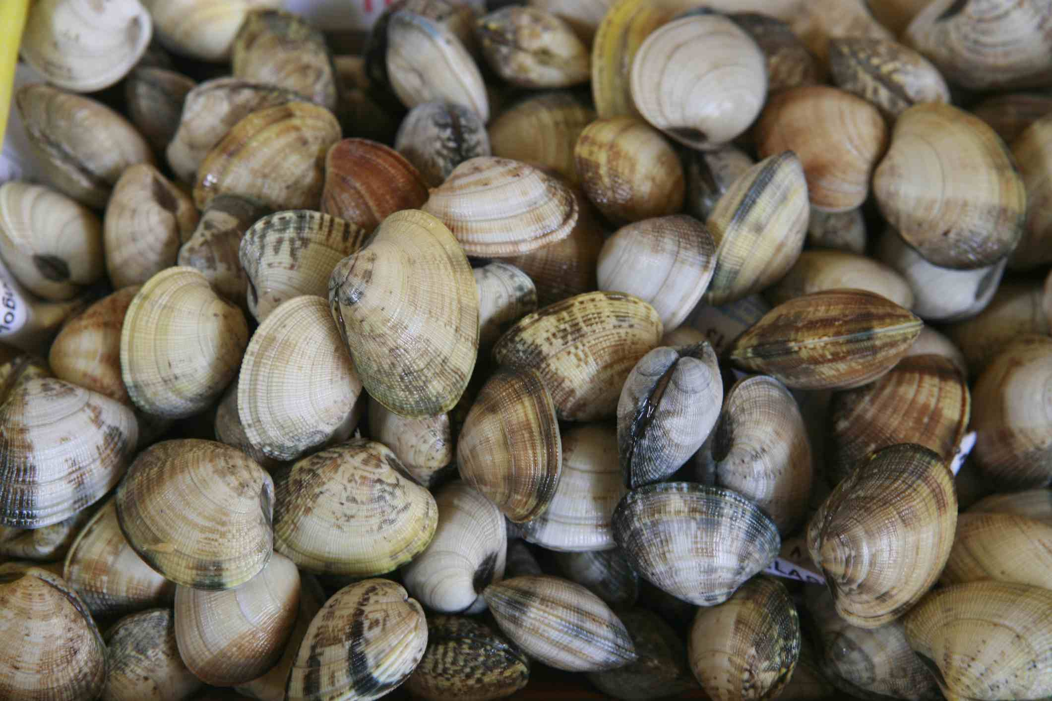Fresh Clams