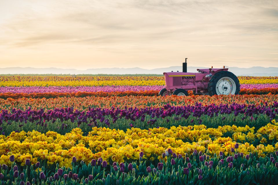 tractor in colorful field