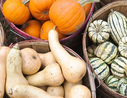 Winter squashes like butternut and pumpkin