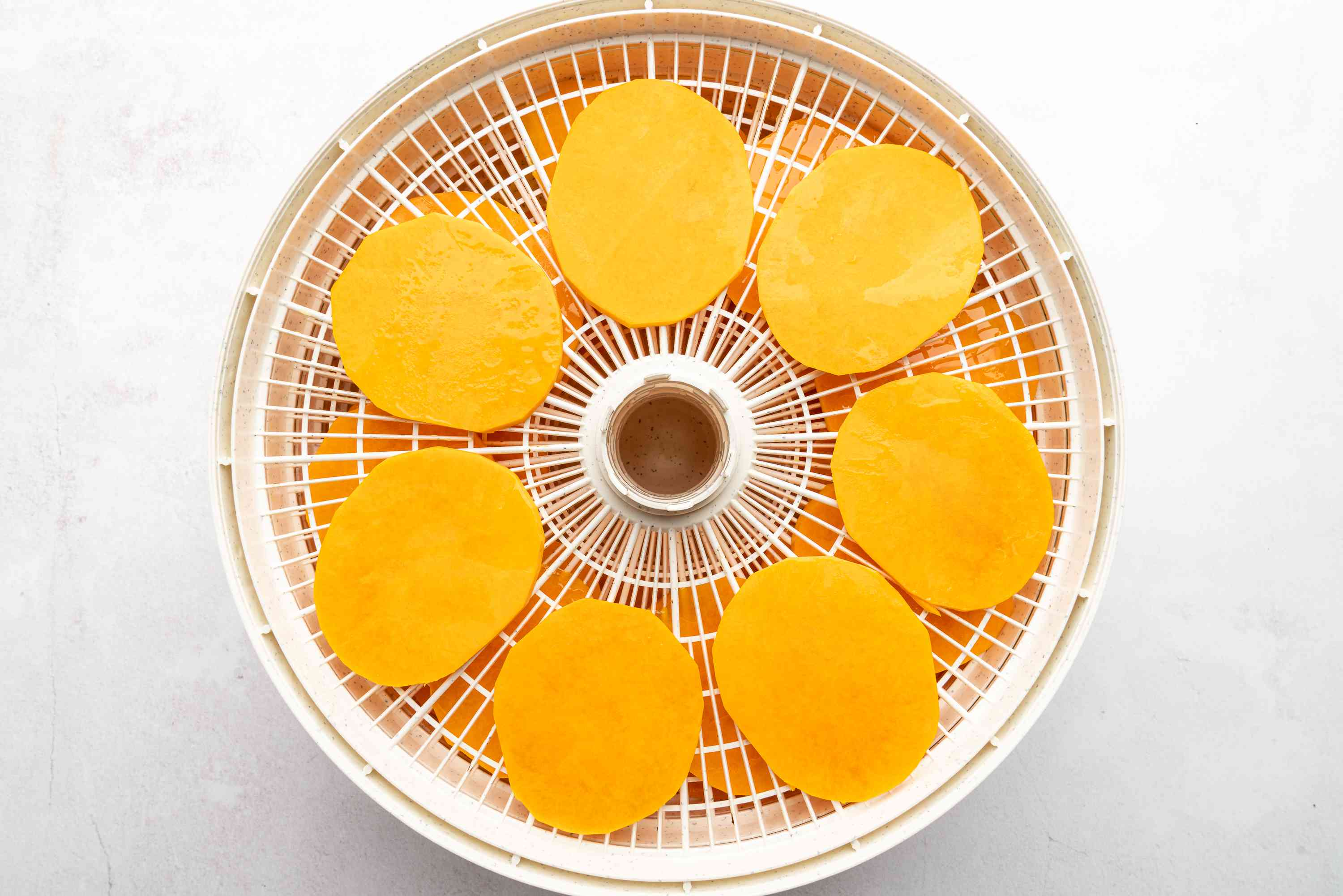 squash slices in a dehydrator