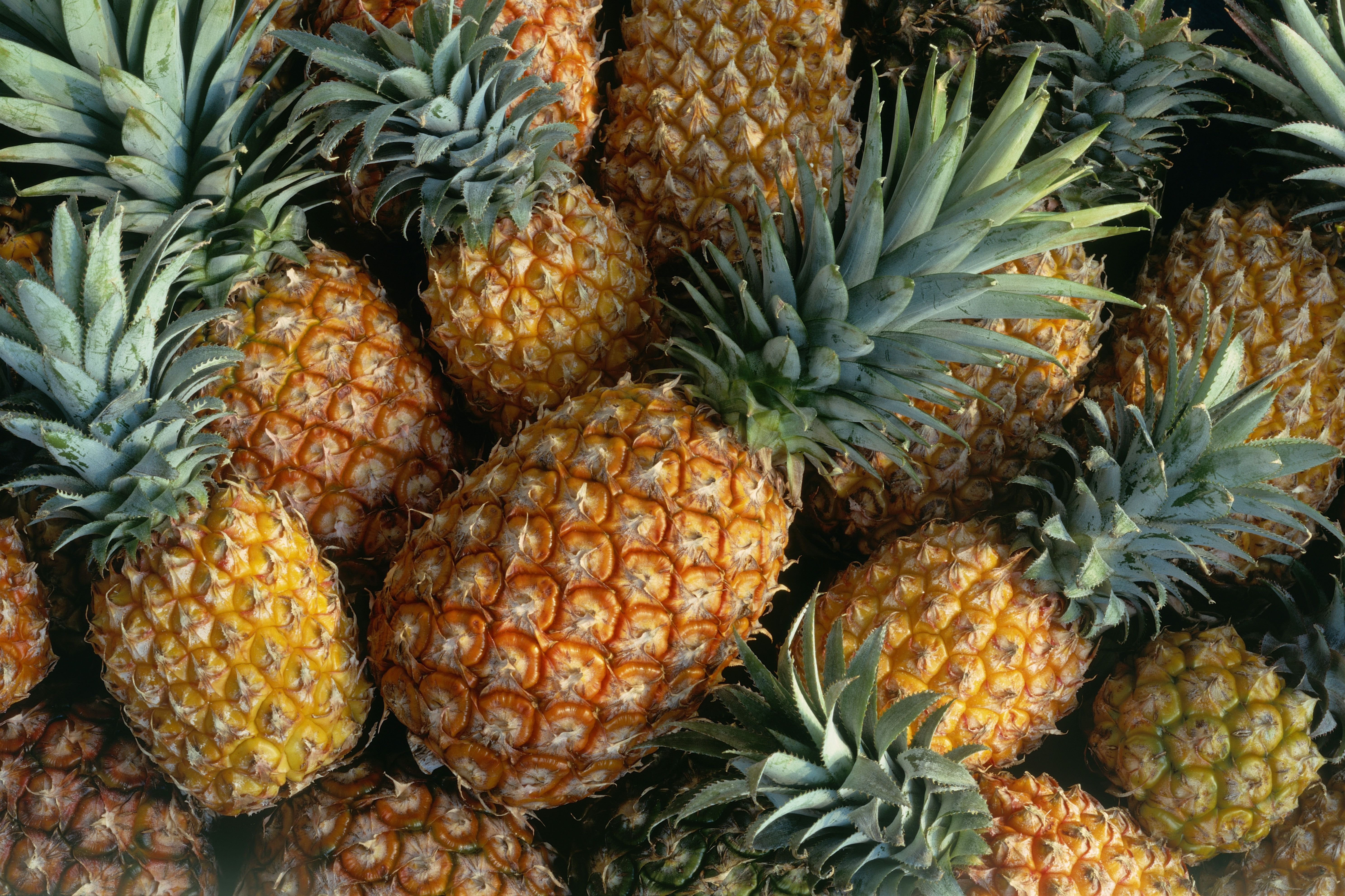 Fresh pineapple specimens, ready to eat with a little prep