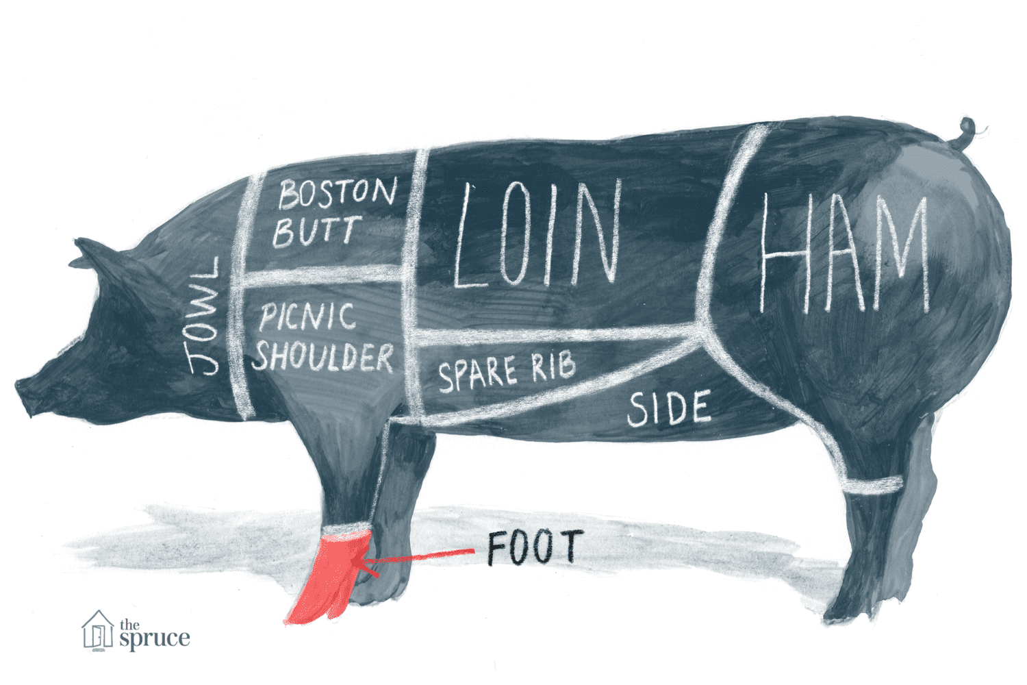 Illustrated diagram of the cuts of pork highlighting the foot
