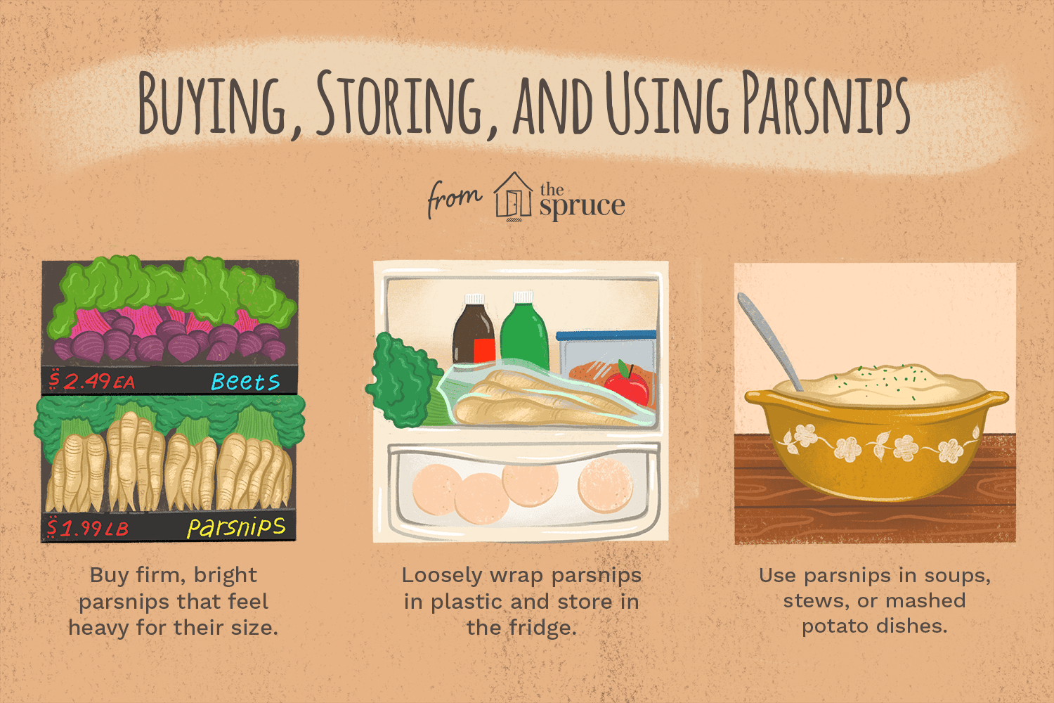 illustration with facts about parsnips