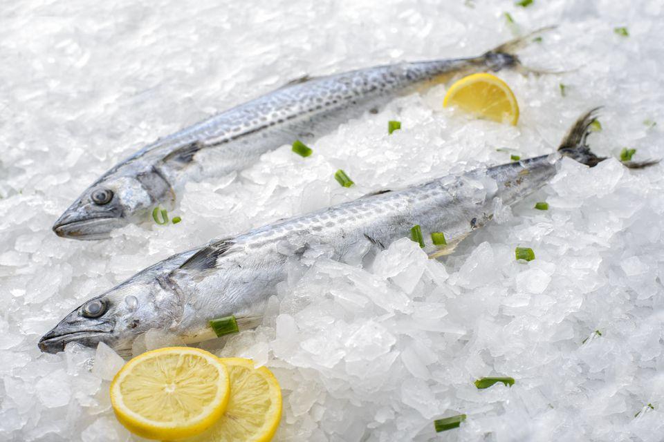 Two Spanish Mackerel with lemon slice on ice