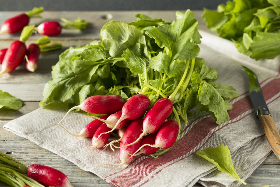 Raw French breakfast radishes